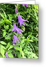 Blue Bells In Summer Greeting Card