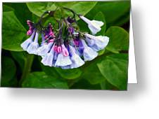 Blue Bells Greeting Card