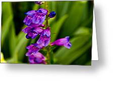 Blue Bells Wild Flower Greeting Card