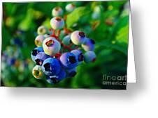 Blue Berries  Greeting Card