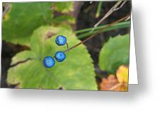 Blue Berries Greeting Card