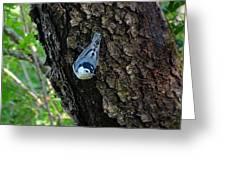 Blue Bird 1 Greeting Card