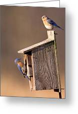 Blue Bird Couple Greeting Card