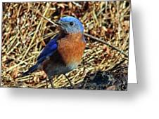 Blue Bird In The Grass Greeting Card