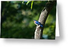 Blue Bird Perched Greeting Card