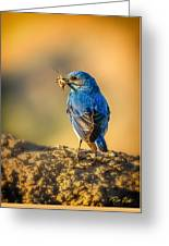 Blue Bird With Breakfast Greeting Card