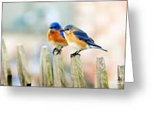 Blue Birds Greeting Card