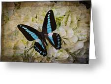 Blue Black Butterfly Dreams Greeting Card