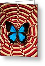 Blue Black Butterfly In Basket Greeting Card by Garry Gay
