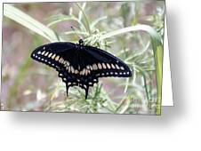 Blue Black Swallowtail Greeting Card