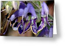 Blue Blooms Greeting Card