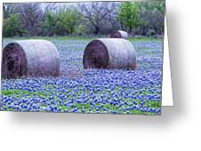 Blue Bonnets In Field Greeting Card