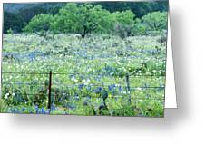 Blue Bonnets,poppies And Willow Tree 2 Greeting Card
