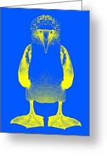 Blue Booby Greeting Card