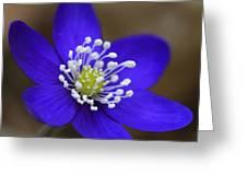 Blue Buttercup Greeting Card by Romeo Koitmae
