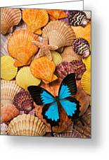 Blue Butterfly And Sea Shells Greeting Card