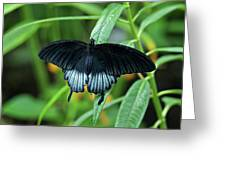 Blue Butterfly II Greeting Card