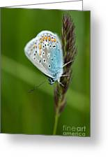 Blue Butterfly On Grass Greeting Card