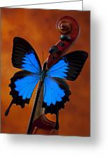 Blue Butterfly On Violin Greeting Card