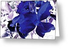 Blue Canna Lily Greeting Card