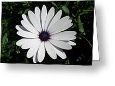 Blue Center Daisy Greeting Card