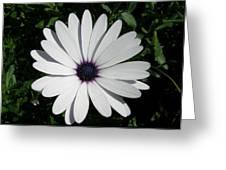 Blue Center Daisy Greeting Card