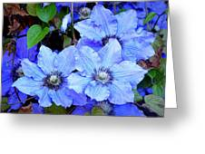 Blue Clematis Greeting Card