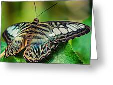 Blue Clipper - Looking Up Greeting Card