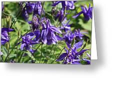 Blue Columbine Greeting Card
