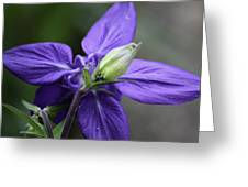 Blue Columbine Squared 1 Greeting Card