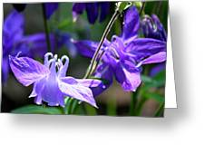 Blue Columbine Squared 3 Greeting Card