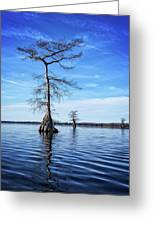 Blue Cypress Greeting Card
