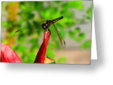Blue Dasher Damselfly Greeting Card