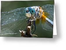 Blue Dasher Dragonfly Greeting Card