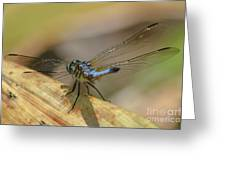Blue Dasher On Old Leaf Greeting Card