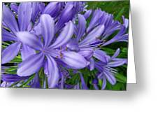 Blue Delight Greeting Card