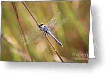 Blue Dragonfly Against Green Grass Greeting Card