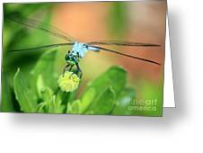 Blue Dragonfly And Bud Greeting Card