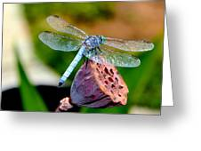 Blue Dragonfly On Lotus Seed Pod Back View Greeting Card