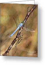 Blue Dragonfly Portrait Greeting Card by Carol Groenen