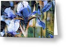 Blue Dutch Iris Greeting Card