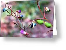 Blue Dwarf Blossom Greeting Card