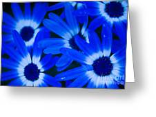 Blue Daisies, Medford Oregon Greeting Card