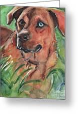 Blue Eyed Dog Greeting Card