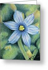 Blue Eyed Grass - 1 Greeting Card