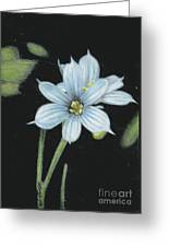 Blue Eyed Grass - 2 Greeting Card