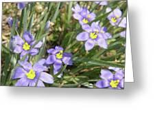 Blue Eyed Grass Greeting Card