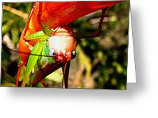 Blue Eyed Grasshopper 2 Greeting Card