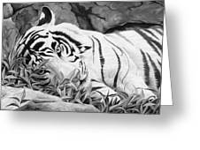 Blue Eyes - Black And White Greeting Card