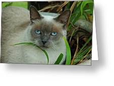 Blue Eyes In The Garden Greeting Card